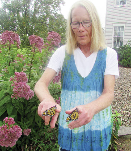 Ann Oberski shows two monarch butterflies she raised in her home. When the butterflies are mature she releases them back into nature.